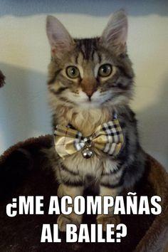 miaucoles_me_acompanas_al_baile_720