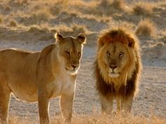 Big game animals such as elephants and lions constantly find themselves in danger of being hunted and killed by rich tourists looking for a quick thrill. Call upon the Zimbabwe government to end the barbaric practice of trophy hunting.
