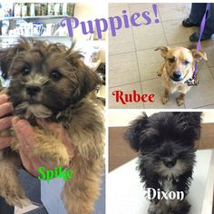 It's so much fun here with all the puppies we get to visit with every day! #edmontonvet #puppies #millwoodseastpets
