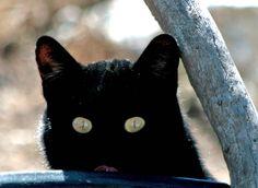 Cat Art -Peek-a-Boo BLACK Cat - Animal Photography - 8x8 fine art photo print perfect Children's Room by CheyAnneSexton on Etsy