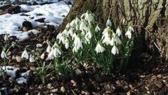 Signs of Spring Week Head to Fairhaven Woodland and Water Garden at South Walsham from Saturday 15 to Sunday 23 February 2014, for Signs of Spring Week, daily 10am to 5pm. Explore the garden, look out for signs of spring and win a prize.