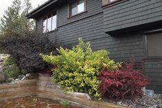 Hier gibt es ein paar Sträucher Futter einen erhöhten Hang entlang der Seite des Hauses. Dies blendet die Veränderung der Höhe als auch das Haus in die natürliche Umgebung zu integrieren.