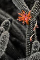 Desert Spring -- dbpeterson723
