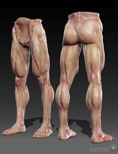 Human Anatomy Sculpting Videos in Zbrush by Painzang Painzang is a Character Artist. Human Anatomy 3d, Zbrush Anatomy, Leg Anatomy, Anatomy Poses, Muscle Anatomy, Anatomy Study, Anatomy Drawing, Anatomy Art, Leg Muscles Anatomy