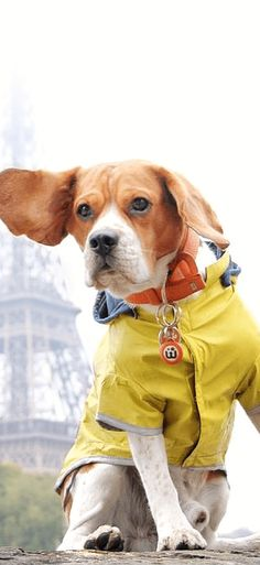 Beagle Love from Paris :)