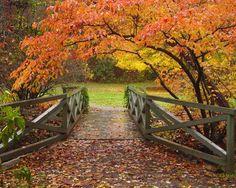 Botanical Gardens At Asheville - Asheville, North Carolina
