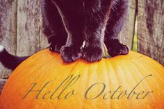 Black Cat And Pumpkin Hello October Quote october happy october hello october hello october quotes october quotes welcome october october be good happy october quotes Halloween Horror Nights, Fete Halloween, Halloween Quotes, Spirit Halloween, Happy Halloween, Halloween Decorations, Halloween Ideas, Halloween Cat, Halloween Costumes
