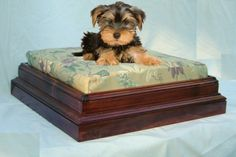 Regal Comfort Pet Bed  Small by QueenCityWoodcraft on Etsy, $130.00