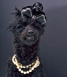 You Will Never Be as Rich as These Pets   VICE