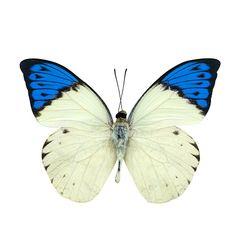 Wings Insect - Foto e Immagini Stock