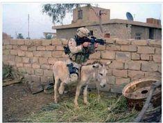 immagini Più Divertenti: Un soldato in guerra