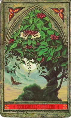 Rowan Tarot: Green Man Tree Oracle: Honeysuckle