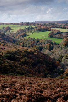 ~ Exmoor ~ Horner Wood from Dunkery Hill ~