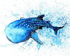 Image result for whale shark watercolor