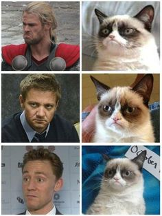 Thor, Hawkeye, and Hiddles are grumpy cats. <3..this is hilarious