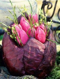 rode kool gevuld met tulpen