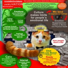Poor people who experience restrictions for their emotional life! cats, lol, infographics