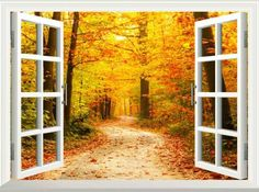 Large windows invite the nature inside and change room colors, making home interiors look spectacular with gorgeous displays of fall leaves in yellow, orange, red and purple colors. Large windows are an attractive, stylish and contemporary feature in new homes. Also large windows dramatically transf