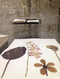 camillafrancesprintsposts:  Taryn Simon, Venice Biennale 2015