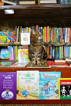 Word on the Water - the London Book Barge, London, UK. It's a bookshop on a 1920's Dutch Barge that moves up and down the Regents Canal, offering a range of quality second hand books. There are two lovely cats that make their way through the books and are always up for a belly rub.