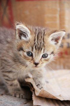 Lil' tiger!