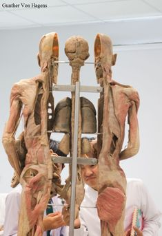 Gunther Von Hagens, Our Body, Puppets, Greek, Statue, Animals, Oc, Animales, Animaux
