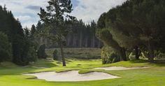 14th hole, Wairakei Golf + Sanctuary