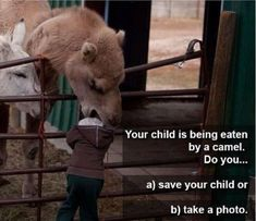 Your child is being eaten by a camel. Do you... a) save your child or  b) take a picture.