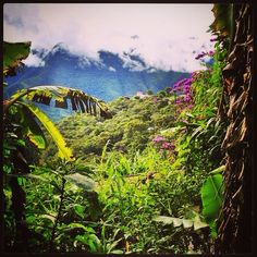 DAY 108 - After a week of high altitude in La Paz, we went down to the tropical forests of Coroico