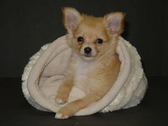 Unique Dog Beds and Sacks made with High Quality Materials. Warm Dog Coats and Blankets for all Size Dogs. Fleece Male Dog Diapers - Hand Made USA Parrot Perch Diy, Warm Dog Coats, Unique Dog Beds, Bird Stand, Pet Dogs, Pets, Parrot Toys, Dog Diapers, Bird Toys