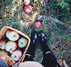 apple picking. did this in NH and they were the best apples I've ever had.