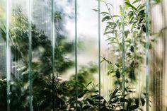 Jpg, Indoor Garden, Potted Plants, Planting Flowers, Facade, Berlin, Nature Photography, Flora, Instagram