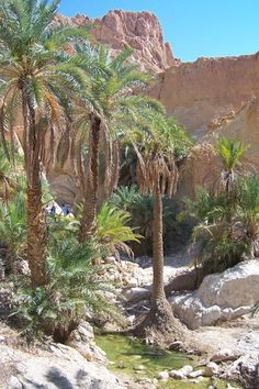 Oasis Chebika, Tunisia