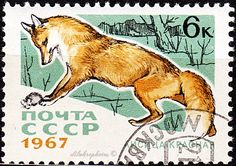 Russia.  FUR BEARING ANIMALS.  RED FOX.  Scott 3373 A1634, Issued 1967 Sept 20, Photo.,  6k. /ldb.