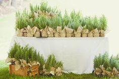 Rosemary plants as wedding favors - this freaking rocks.  @kari copeland?