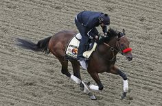Nyquist works out with exercise rider Jonny Garcia during a morning workout, Thursday, May 19, 2016, in Baltimore. The 141st Preakness Horse Race will be held Saturday.(AP Photo/Garry Jones)