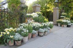white in pots