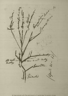 """Résultat de recherche d'images pour """"darwin sketches"""""""