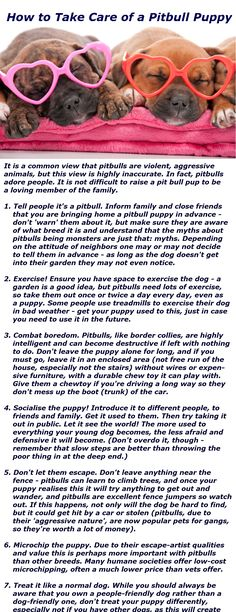 Pitbull Dogs - great information for all puppies to become well adjusted adult dogs!