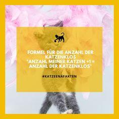 Die Katzeena #Fakten Rubrik überrascht immer wieder mit neuem #Wissen über die #Fellnasen #katzen #katzenliebe #fakten #tierfakten #katzenzubehör Animal Facts, Litter Box, Knowledge