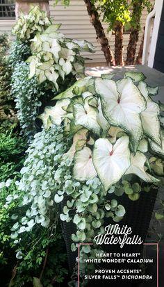 Outdoor Pots, Outdoor Flowers, Outdoor Gardens, Outdoor Flower Planters, White Plants, White Garden Flowers, Planting Flowers, All Flowers, Container Flowers