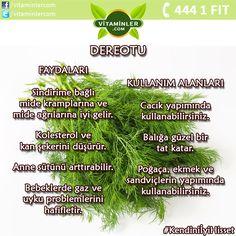 Dereotu bitkisini ne sıklıkta tüketiyorsunuz?  #vitaminler #vitaminlercom #vitamin #sağlık #sağlıklıyaşam #enerji #healthy #mineral #omega3 #multivitamin #antioksidan #cvitamini #probiyotik #balıkyağı #bitkisel #ginseng #halsizlik #bağışıklık #depresyon #kolesterol #stres #diabet #uyku #dereotu  Kendini İyi Hisset