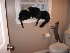 sao's WINDOW SILL Cats Silly Cats, Cute Cats, Window Sill, Beautiful Cats, Animals, Kawaii Cat, Kawaii Cat, Animales, Animaux