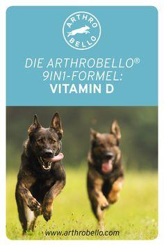 Mit den Arthrobello-Gelenkkapseln sorgen Sie dafür, dass die Calciumaufnahme Ihres Hundes bestmöglich unterstützt wird und das Haustier genügend Vitamin D und Kalzium bekommt. Vitamin D, Movies, Movie Posters, Art, Pet Dogs, Animales, Art Background, Films, Film Poster