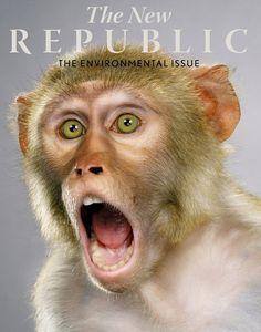 Jill Greenberg, New Scientist, Little Monkeys, Environmental Issues, Best Photographers, Studio, Animals, Portraits, Animation