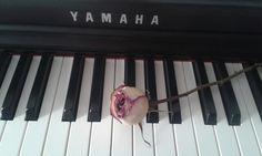 Klavierunterricht in Wien
