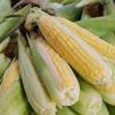Honey Select Hybrid (syn) - Corn Seeds