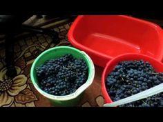 Как сделать домашнее вино из винограда Изабелла - YouTube