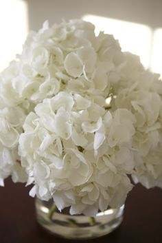 <p>Flower lovers of all kinds delight in the incomparable beauty of hydrangeas in full bloom. The fluffy, dome-shaped flowers on sturdy stems ramp up the allure of any garden with their variegated col