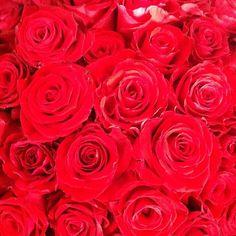 זר ורדים בלי פילטר. אדום אדום